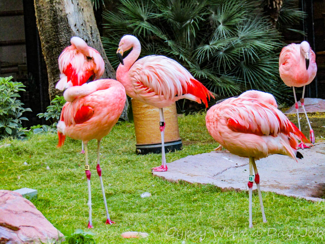 Need free fun in Vegas? Visit the Las Vegas Flamingo flamingos habitat!
